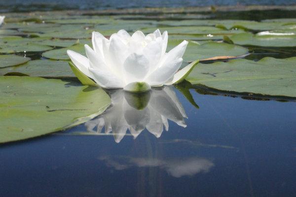 counseling lake elmo